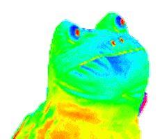 Gif Rainbow Frog Frog Meme Rainbow Gif Frog