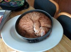 16 adorable pets who have found the oddest places to sit Animals And Pets, Funny Animals, Cute Animals, Cute Kittens, Cats And Kittens, Cat Roll, Flea Shampoo For Cats, Cat Sleeping, Ginger Cats