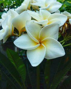#flowers #nature #photographer #travel #preching #amanacer http://tipsrazzi.com/ipost/1517109928057594923/?code=BUN23ELF2Qr