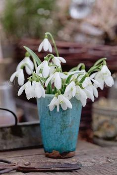 snowdrops in blue ceramic vase