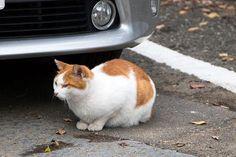 Stray cat ノラネコ straycat cat 野良猫