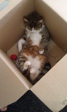I love my box !!!!
