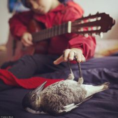 Penguin the magpie makes himself comfortable as Noah plays some tunes on his guitar...