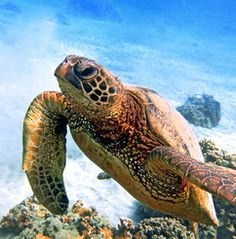 Suggestion from Sarah: Snorkeling trip recommended- save $10 book online