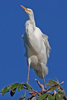 4861 Visite www.flickr.com/photos/fpizarro