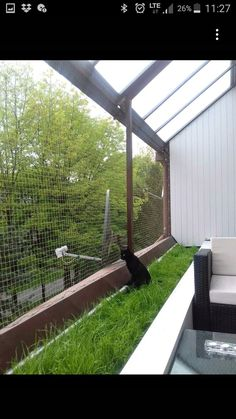 Pampered cat. Bringing the outdoors, in