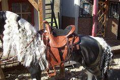 saddle set 40 c | Flickr - Photo Sharing!