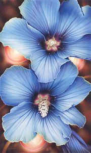 Colored Pencil Drawing - Blue Hibiscus With Fairy Lights by Amy S Turner