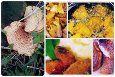 How to cook pheasant's back or dryad's saddle mushrooms