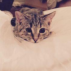 Aww cute lil cat