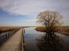 Point Pelee ON by BryanL1, via Flickr    (Where I want to be)