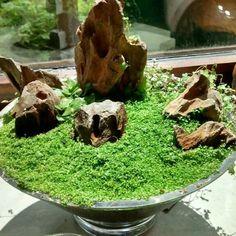 Moss garden and rocks