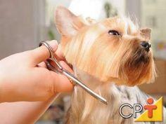 Curso Como Fazer Banho e Tosa em Cães - Tipos de Tosa - Cursos CPT