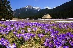 Góry w Polsce: Tatry, Dolina Chochołowska