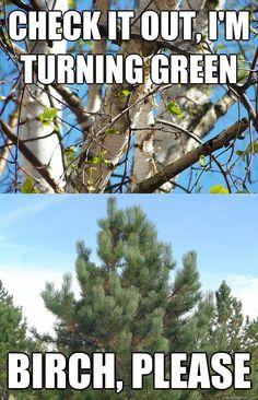 A little tree humor