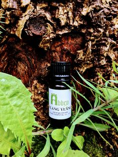 Many find the scent of ylang ylang to be soothing and relaxing - perfect to diffuse after a long day at work!  Want to keep with us on social?! Follow our fresh new Instagram, and join the conversation on Facebook too! #essentialoils #natural #health #holistics #aromatherapy New Instagram, Natural Health, Aromatherapy, Conversation, Essential Oils, Join, Fresh, Photo And Video, Facebook