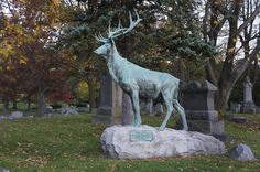 Oakwood Cemetery Oakwood Cemetery, Animals, Animales, Animaux, Animal, Animais