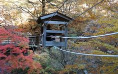 A Shikoku guide: wild beauty and cultural wealth in the eastern part of the island - VOYAPON Tokushima, Thatched Roof, Wild Nature, Osaka, Rafting, Kyoto, The Locals, Cruise, Tours