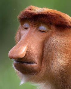 Expressive Wildlife Pictures Showcase the Micro-Expressions of Mammals Primates, Mammals, Funny Animals, Cute Animals, Odd Animals, Animals Amazing, Interesting Animals, Strange Animals, Unusual Animals