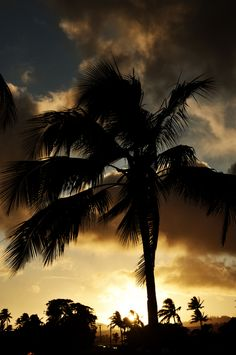 A golden sunset behind the palm trees from The Beach House lawn on Kauai