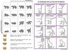 El #lenguaje corporal de los #gatos. Enlace muy completo .... http://www.residenciacaninalaluna.com/Lenguaje%20corporal%20en%20gatos.html