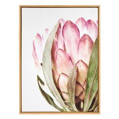 Kate and Laurel Sylvie Pink Protea Flower Framed Canvas Wall Art by Amy Peterson, Natural, Size: 28 x Brown Protea Art, Protea Flower, Flower Canvas, Flower Frame, Colorful Wall Art, Colorful Flowers, Canvas Frame, Canvas Wall Art, African Plants