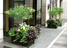 Classic box planters get a bold yet elegant new look, spring, summer, fall and winter (Summer).