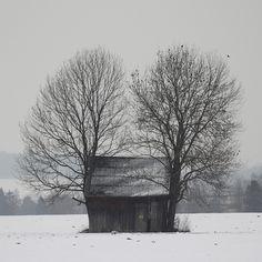 Winter By Barbara Romankiewicz