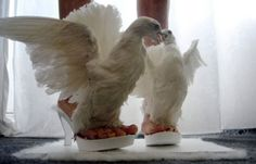 Place Where Taxidermy Met Shoes