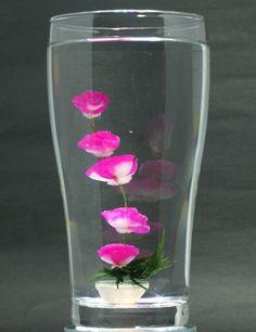 水中花・ピンク