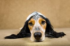 Pet stress: Ways to help relax your pets