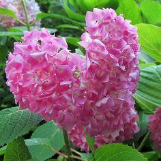 Pink Heart Flower