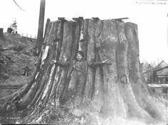 Man with tree stump, Rainier, Oregon.  #ORhistory #logging #trees