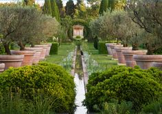 Gorgeous olive trees in large pots, manicured hedges, a little canal, everything || clive nichols