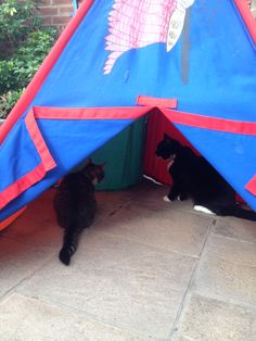 Have tent .... will play