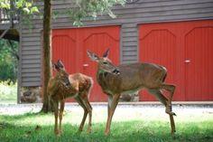 Visit Shadow Mountain Escape - bordering the Shenandoah National Park - Luray, VA!