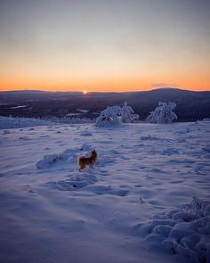 """1,195 tykkäystä, 18 kommenttia - Ville Petter (@ville.petter) Instagramissa: """"Riki enjoying sunset and snow!🐕🌄❄️ #breaklevi #levilapland"""" Animals And Pets, Nature, Have Fun, Snow, Sunset, Landscape, Instagram, Scenery, Pets"""