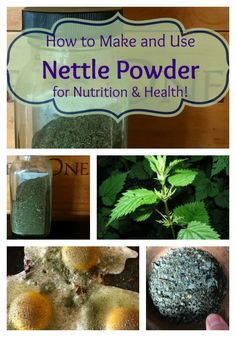 Nettle is a highly nutritious herb: Filled with vitamins and minerals, it not only is a great daily tonic, but it is a safe option for a vast variety of health maladies! Here is how to make Nettle Powder and use it in your cooking for health and vitality! Nettle Recipes, Nettle Tea Recipe, Edible Wild Plants, Ginger Benefits, Nutrition Guide, Nutrition Education, Wild Edibles, Herbal Remedies, Health Remedies