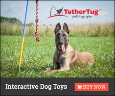 what is the best dog fence system on the market today? It& almost invisible, cheaper than other dog fencing, climb proof, pet safe and portable! See the. Smart Dog Toys, Best Dog Toys, Best Dogs, Toy Puppies, Small Puppies, Dogs And Puppies, Dog Jumping Fence, Dog Fence, Yogurt For Dogs