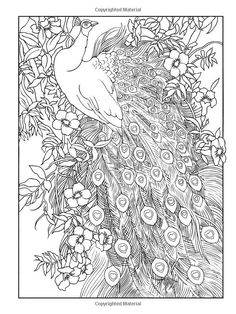 Creative Haven Peacock Designs Coloring Book Free Online Printable Pages Sheets For Kids Get The Latest