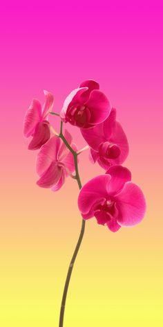 Orchid Minimal Wallpaper 1080X2160
