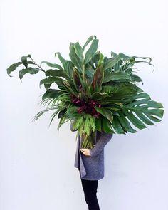 A Botanic Arrangement with Lesley - Austin Bloom, Adelaide Hanging Flowers, Flower Garlands, Jungle Flowers, Pink Flowers, Ikebana Arrangements, Floral Arrangements, Beautiful Flower Arrangements, Beautiful Flowers, Greenery Garland