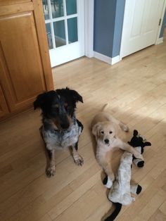 Cooper and Bailey