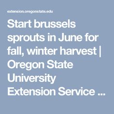 Start brussels sprouts in June for fall, winter harvest | Oregon State University Extension Service | Gardening