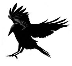 """""""Crow 2010"""" by *oceangranny03  -  Traditional Art / Drawings / Animals"""