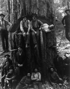 Lumberjacks pose with a 12-foot-wide fir tree in 1901.