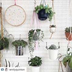 Green Up Your Gaff – Grace&Thorn - East London Florist