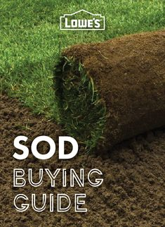 Find out if sod is best for your lawn!
