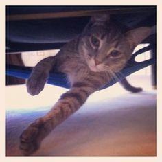 DIY Cat Stuff for kitten next year :)