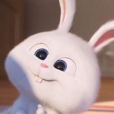 Cute Bunny Cartoon, Cute Cartoon Characters, Cute Cartoon Pictures, Cartoon Jokes, Cute Profile Pictures, Cute Disney Wallpaper, Wallpaper Iphone Cute, Cute Cartoon Wallpapers, Snowball Rabbit